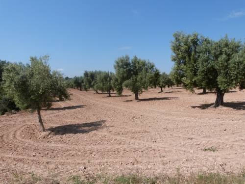 Cretas - 14.000m2 plot of farmland