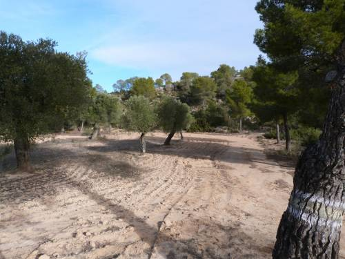 Calaceite - 2 hectares of farmland
