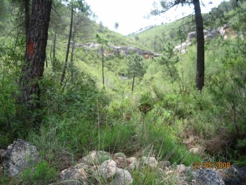 Teresa de Cofrentes - Hunting estate of 938 hectares