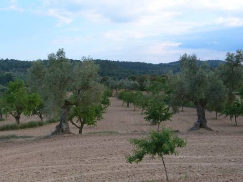 Valjunquera - 3.5 hectares of land