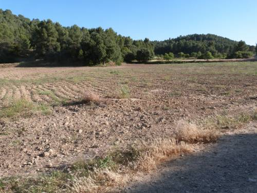 Mazaleon - 10.000m2  piece of farmland