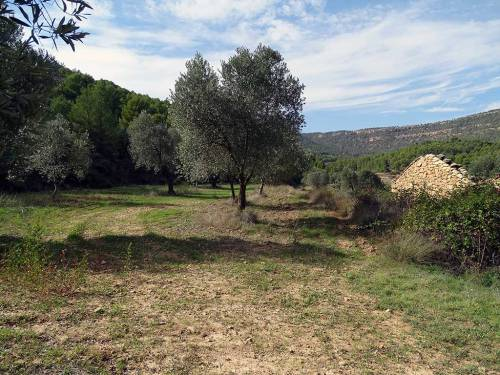 Ráfales - Farmland of 5 hectares