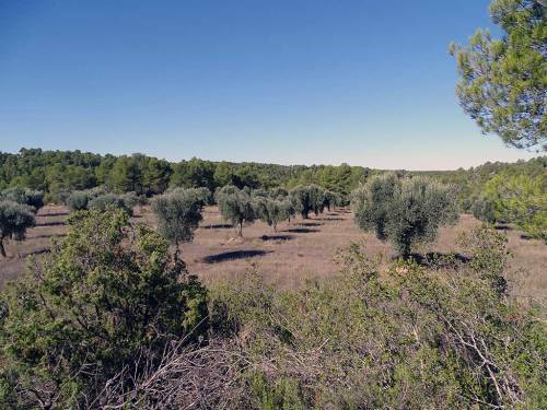 Cretas - Farmland of 18 hectares