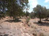 Alcañiz - Agricultural property without irrigation