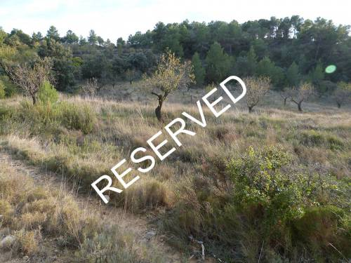 Torre del Compte - Valderrobres -  20.000m2 west facing plot of farmland