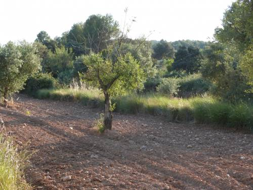 Cretas - 17.000m2 plot of farmland