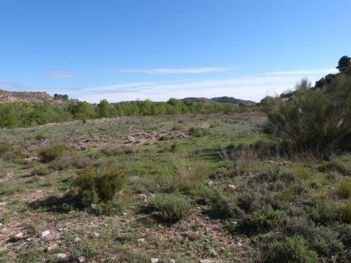Castelserás - 5 hectares of irrigated farmland