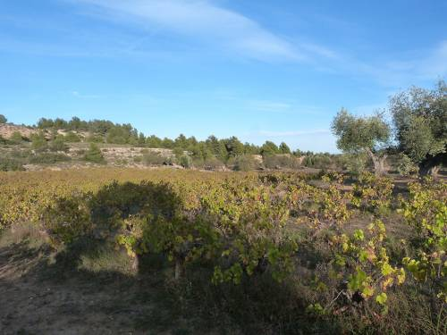 Valjunquera - Rural property of 12.000 m2